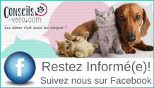 conseils vétérinaires chien chat