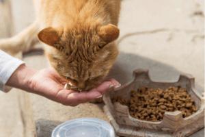 choisir croquettes premium chat chaton