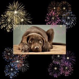 chien peur feux artifice pétards