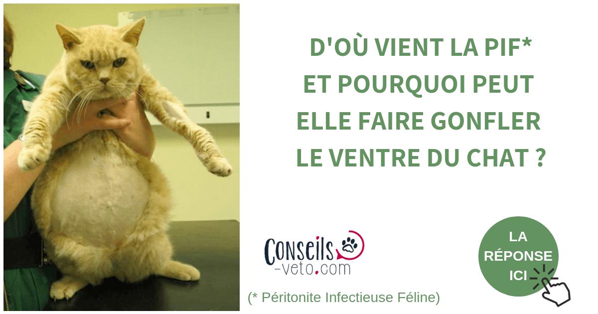 PIF du chat , Tout sur la Péritonite Infectieuse Féline