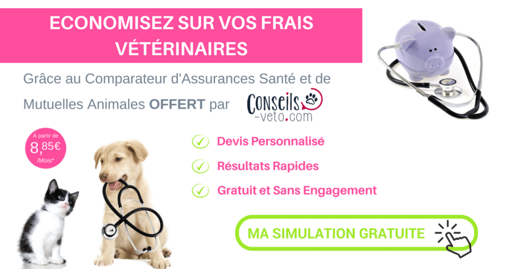Comparateur d 39 assurances sant et mutuelles pour animaux for Comparateur assurance garage