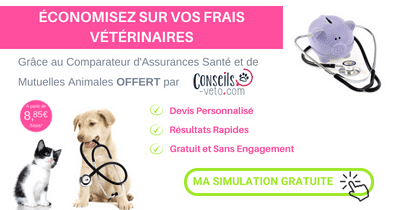 Comparateur mutuelle assurance chien chat article