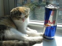 taurine-chat-red-bull