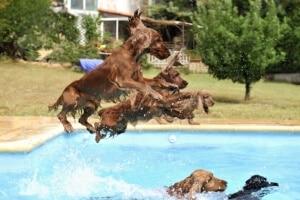rafraîchissement chien chaleur canicule baignade