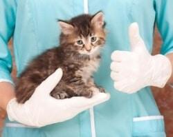 soigner plaie chat ou chaton vétérinaire