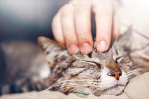 assurance santé mutuelle chat
