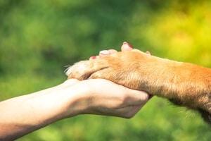 mutuelle assurance santé chien