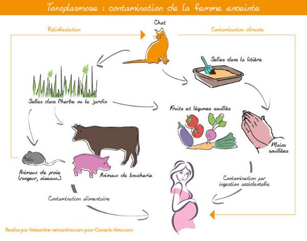 toxoplasmose grossesse aliment interdits contamination