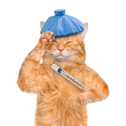 symptômes fièvre toxoplasmose chien chat