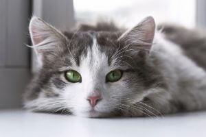conseils vétérinaires pour chats