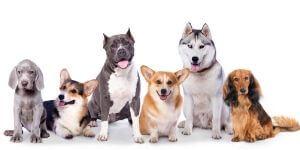conseils vétérinaires pour chiens