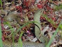 piqure serpent chien chat