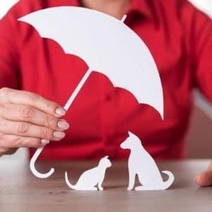 assurance mutuelle santé chien protection