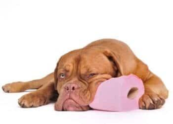 soigner diarrhée chien chiot