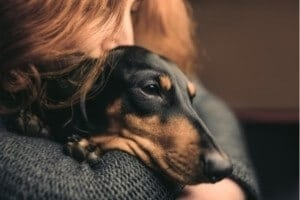 odeur chien sent pas mauvais